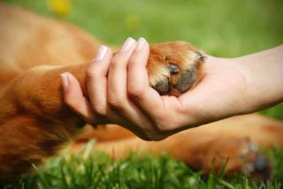 Pierwsza pomoc psa