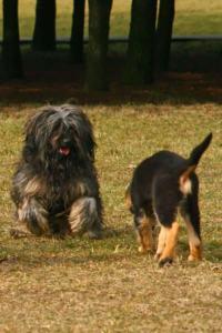 Dlaczego pies zjada odchody i co robić aby go tego oduczyć?