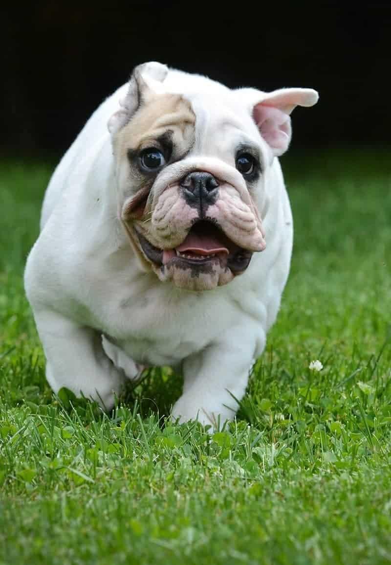 Jak określić reaktywność psa?