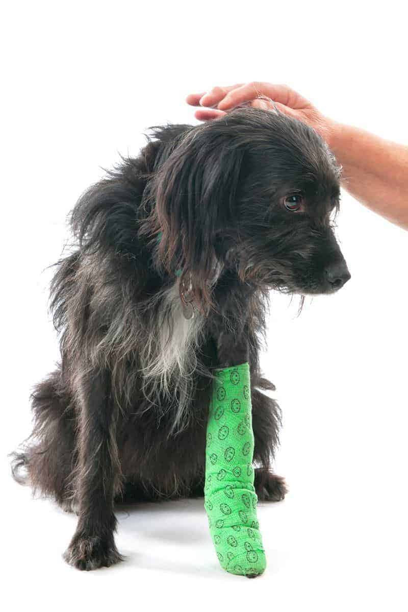 Pierwsza pomoc przy złamaniu łapy psa