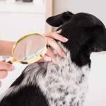 Karma dla psa/kota z problemami skóry: alergią skórną i AZS