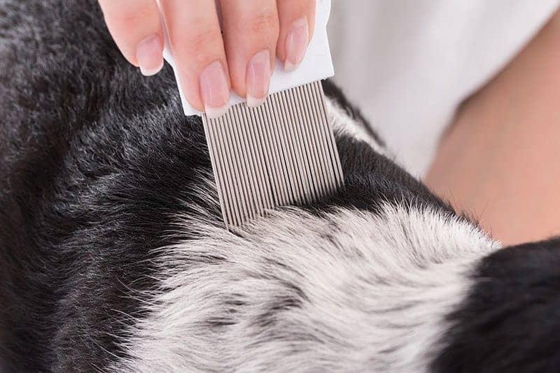 Diagnostyka chorób skóry psa