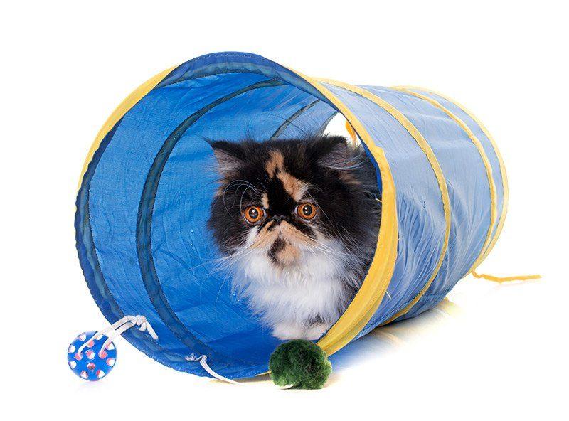 Zabawka dla kota tunel