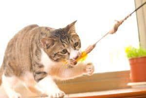 Zabawki dla kota: jak zrobić zabawkę dla kota diy i jak się z nim bawić?