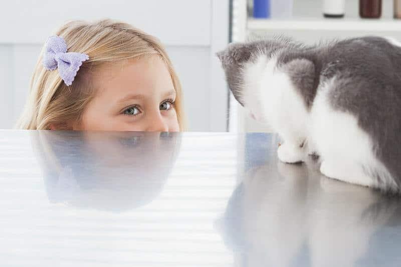 Zabawy z kotem w domu