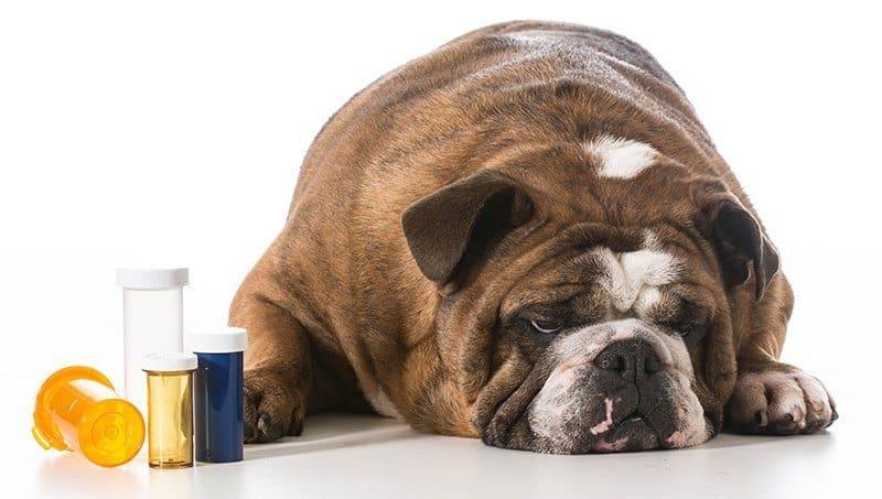 Zespół przedsionkowy u psa leczenie