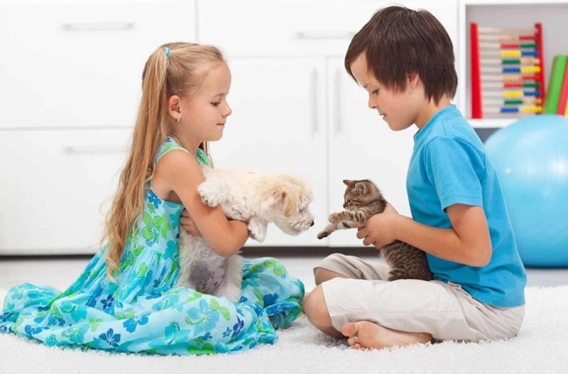 Jak oswoić psa z kotem i kiedy najlepiej to zrobić?