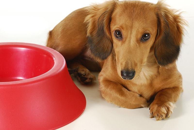 Karma dla psa po zabiegu