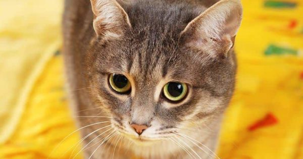 Jak Nauczyć Kota Korzystać Z Kuwety I Co Zrobić Kiedy Kot