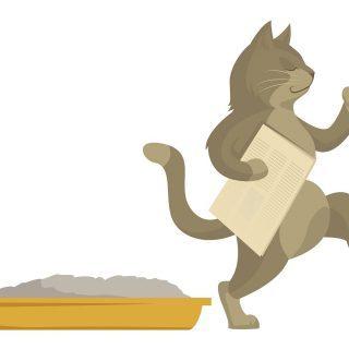 Kot sika poza kuwetą?