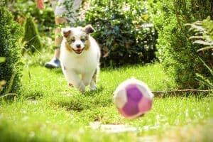Socjalizacja psa: czym jest i jak socjalizować szczeniaka?