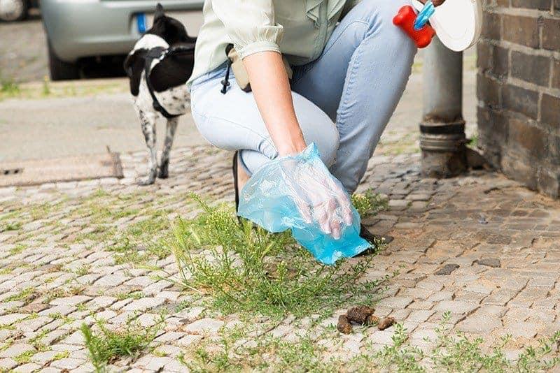 Pamiętaj o sprzątnięciu kału psa