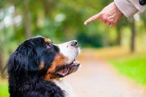 Jak karać psa: kiedy to robić i czego unikać w karaniu psów?