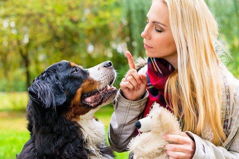 Sposoby karania psa