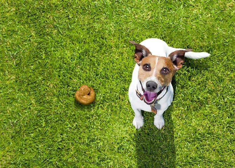 Jak zapobiegać biegunce u psa?