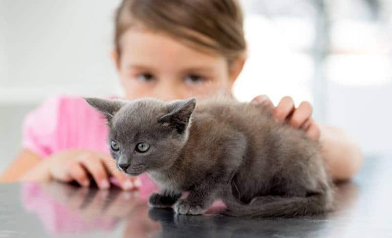 Jak wychować kociaka?