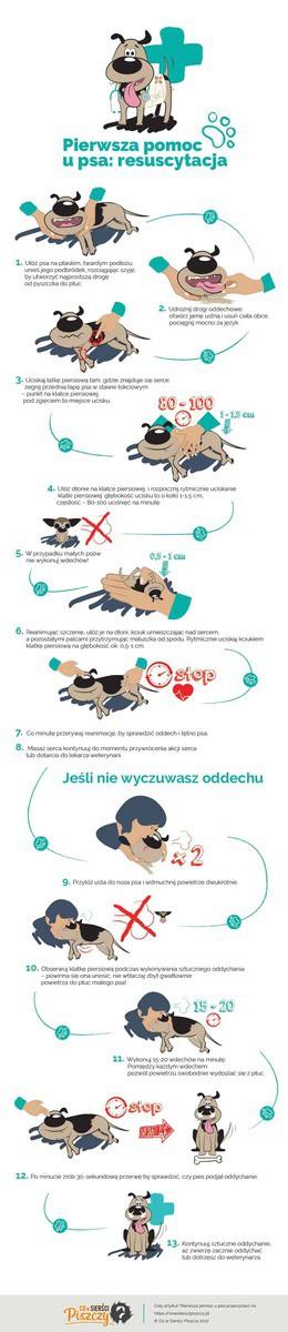 Resuscytacja kota Infografika   Co w Sierści Piszczy