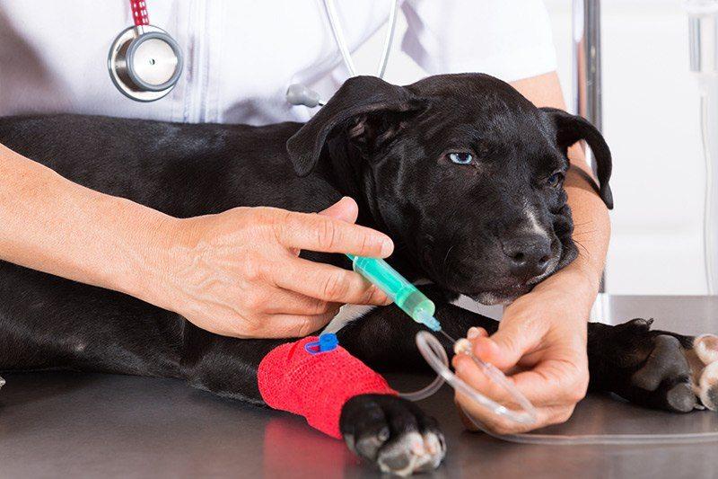 Zapobieganie odwodnieniu psa