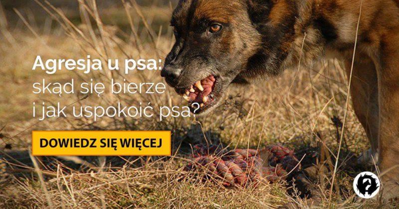Agresja u psa: co zrobić gdy pies jest agresywny?