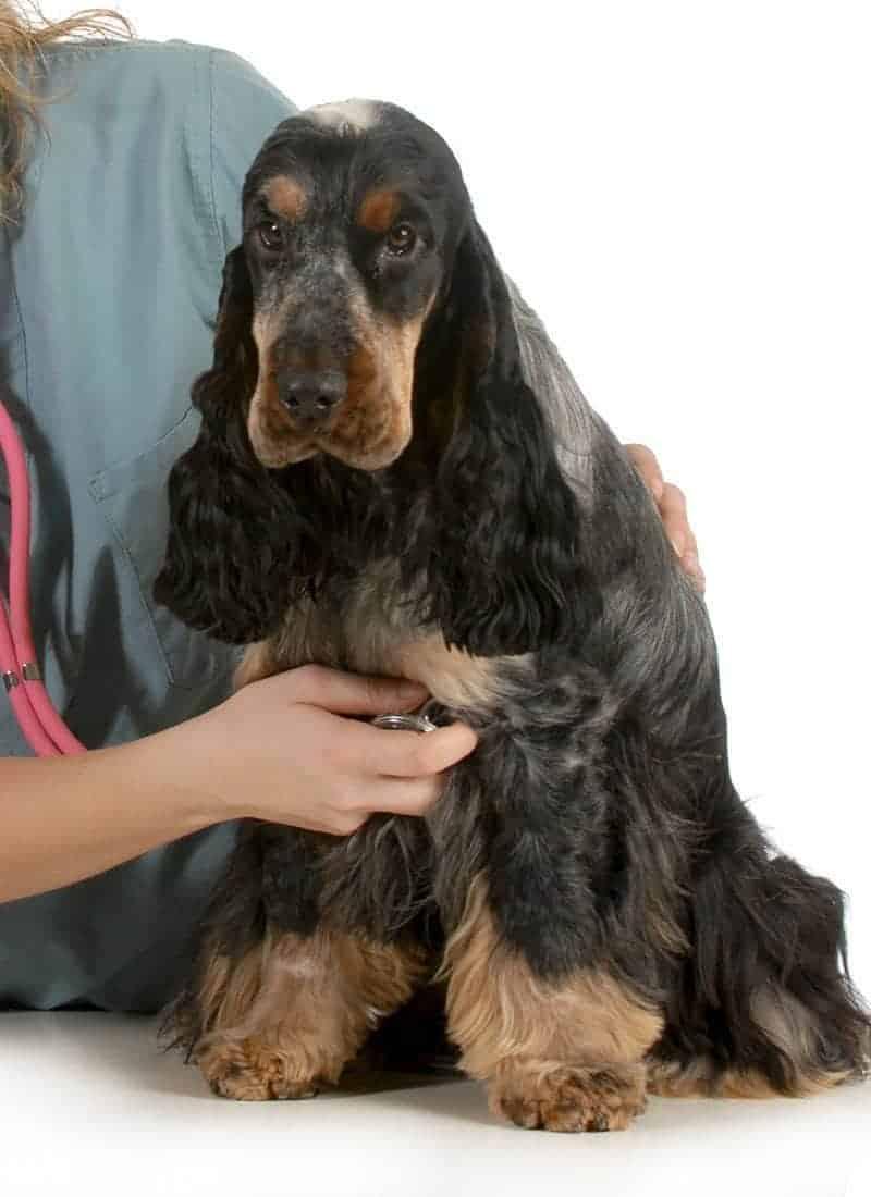 Badanie serca u psa
