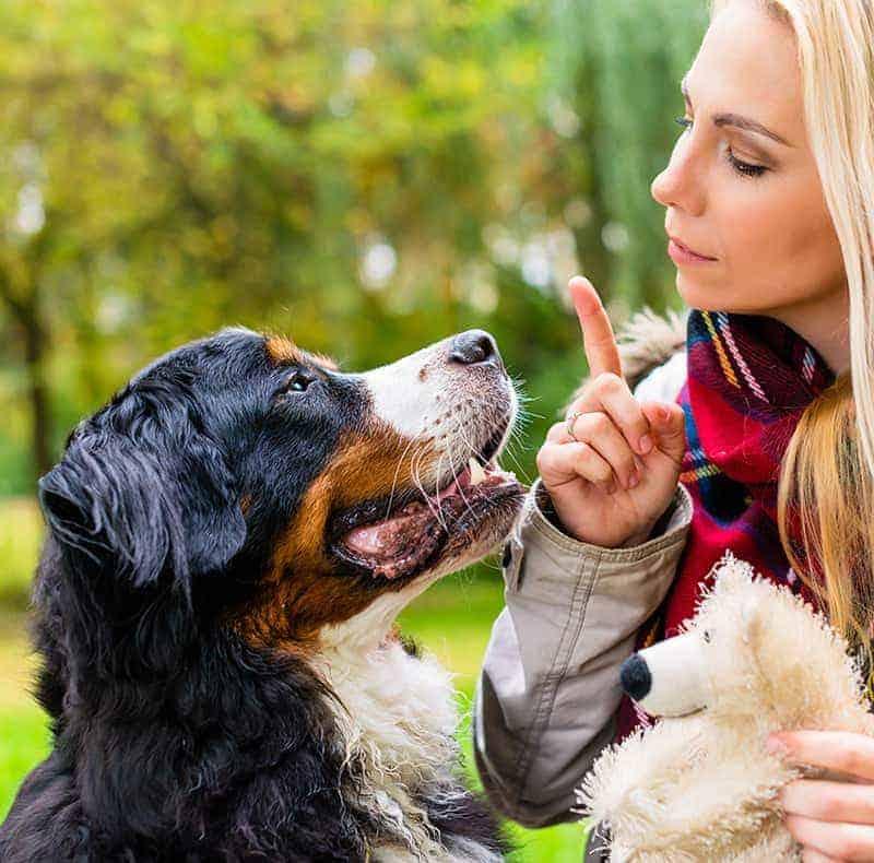 Czy można oduczyć psa szczekania?