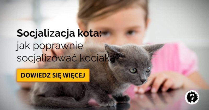 Socjalizacja kota: czym jest i jak socjalizować kociaka?
