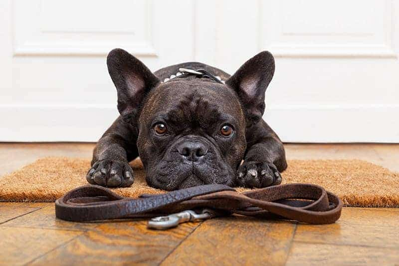 Jak pies radzi sobie z nudą?