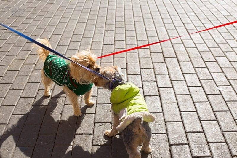 Jak dobrać smycz do psa?