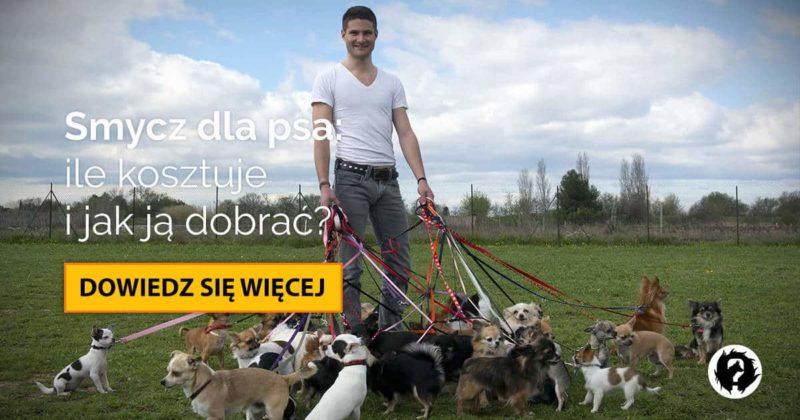 Smycz dla psa: klasyczna, regulowana, czy automatyczna flexi?