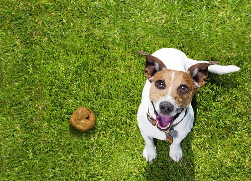Chora trzustka u psa