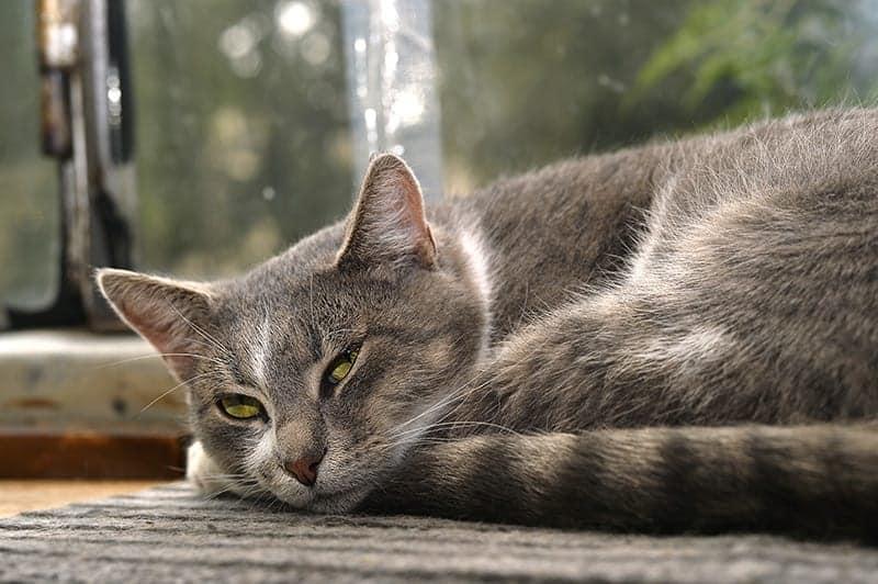Zaburzenia apetytu i pragnienia u starego kota