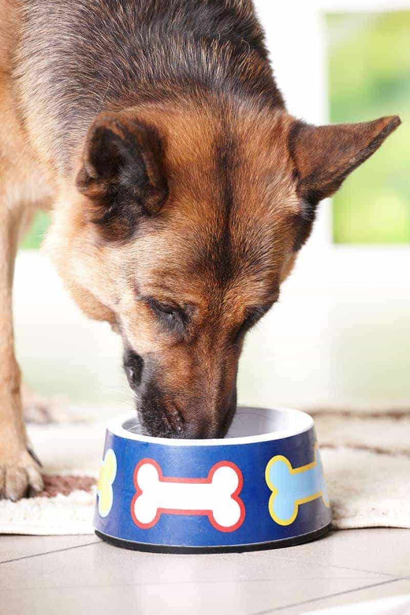 Karma dla dorosłego psa