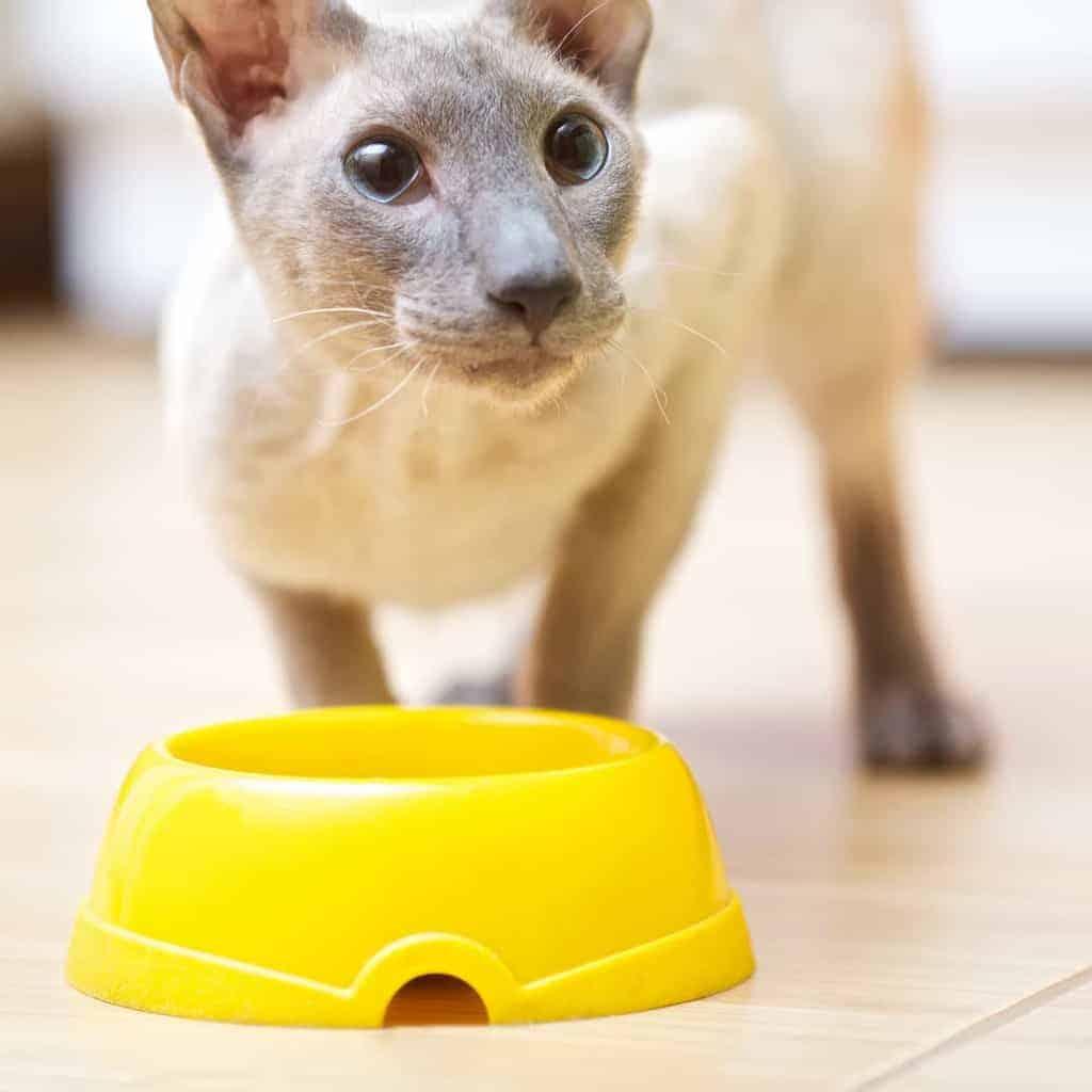 Żywienie kota i psa po sterylizacji/kastracji
