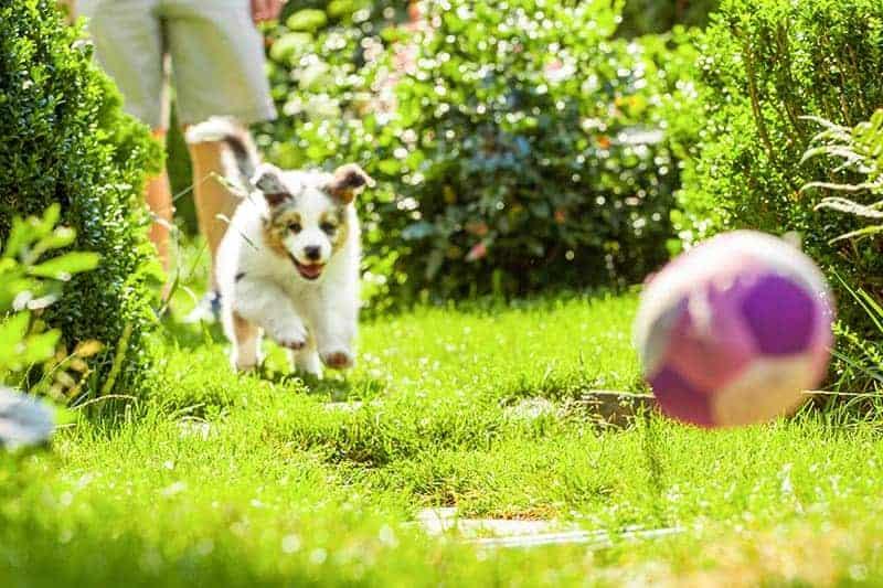 Nauka karności (przychodzenia psa na zawołanie)