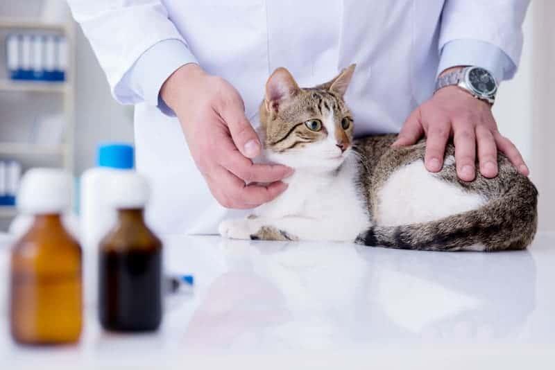 Kiedy podawać kotu witaminy