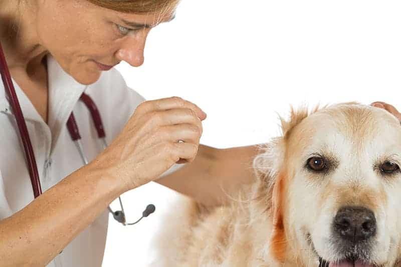 Hot spot u psa leczenie