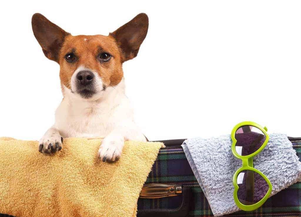 Hotel dla psa