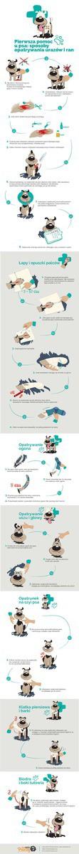 Opatrywanie ran u psa Infografika