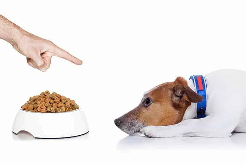 Twój pies nie chce jeść? To może być stres