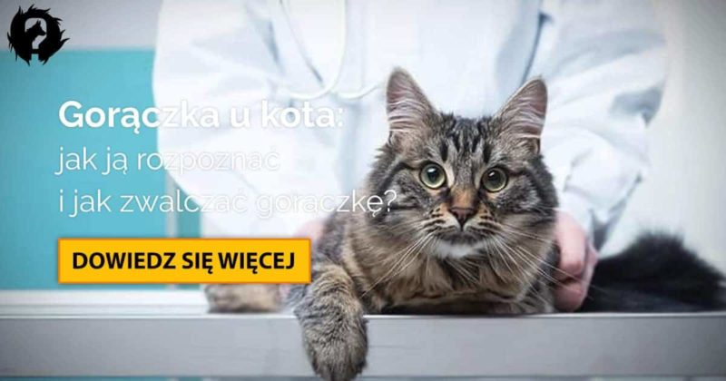 Gorączka u kota: co KAŻDY opiekun kota powinien o niej wiedzieć?
