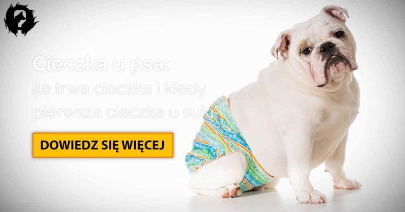 Cieczka u psa: ile trwa cieczka i kiedy pierwsza cieczka u suki?