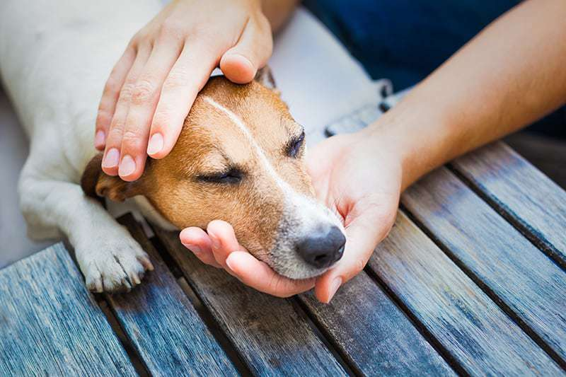 Wymioty u psa mogą być objawem poważnych chorób