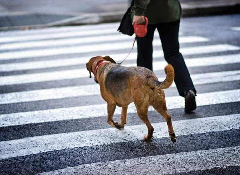 Zakaz spacerów bez smyczy
