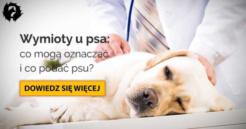 Wymioty u psa: 9 najczęstszych przyczyn i domowe sposoby na wymioty