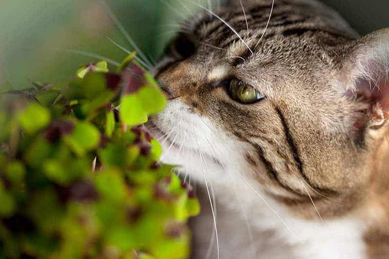 Rośliny szkodliwe dla kotów