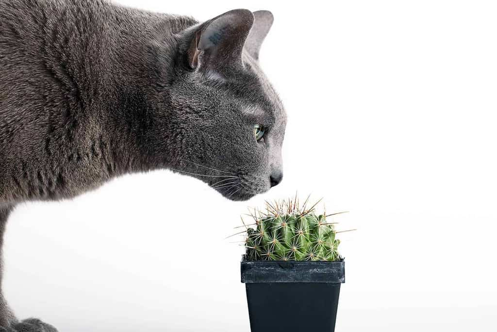 Rośliny trujące dla kota