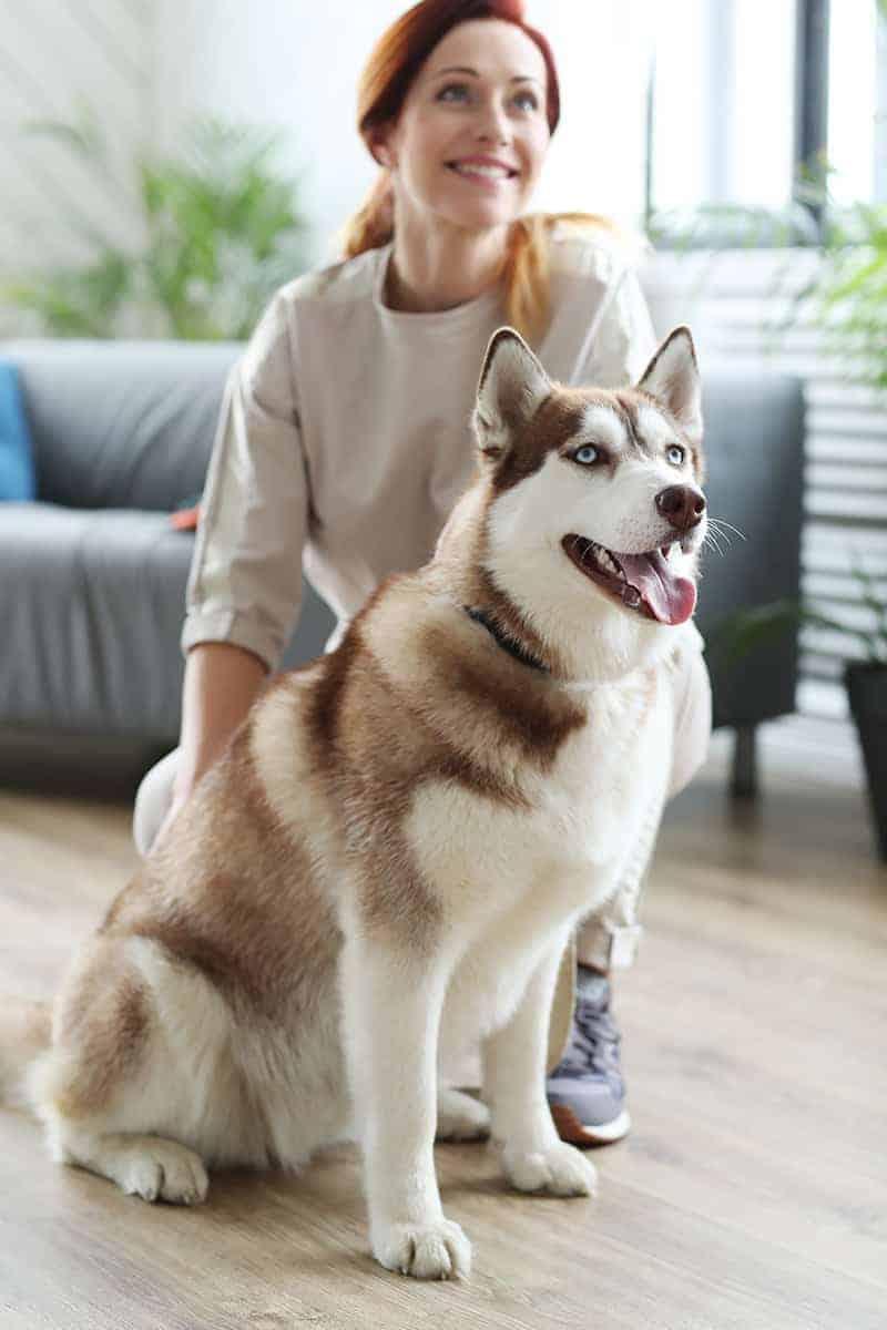 Czy warto zdecydować się na psa rasy husky?