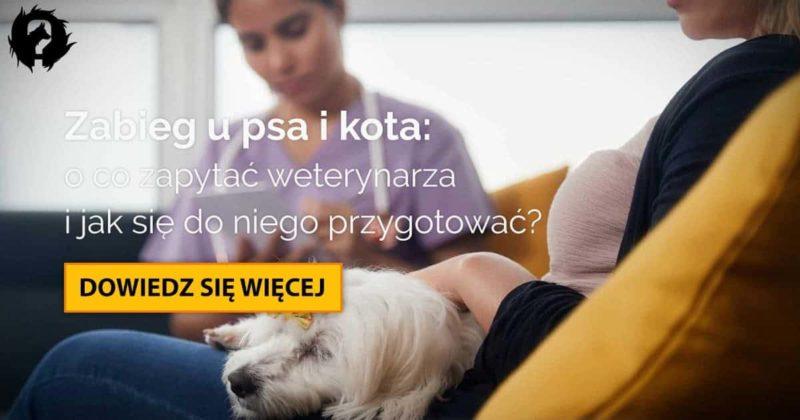 Zabieg u psa i kota: o co zapytać weterynarza przed operacją?