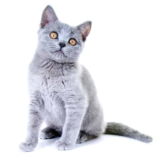 Ile żyje kot kartuski?
