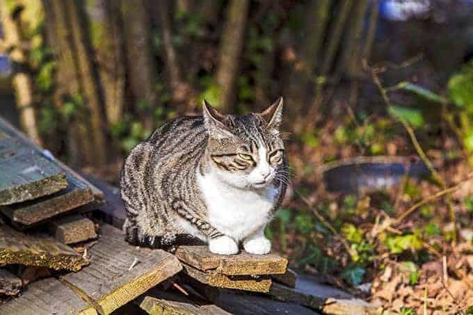 Sposób życia kota